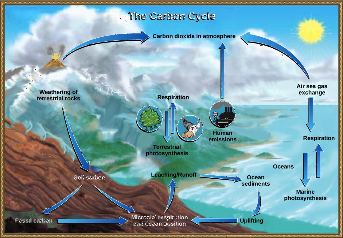 ap environmental science textbook pdf