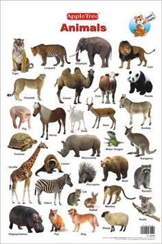 wild animals images with names pdf