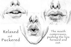 anatomy of facial expression pdf torrent