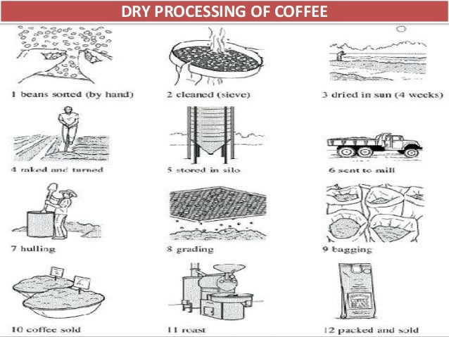 instant coffee manufacturing process pdf